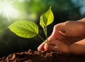 NỖ LỰC GIẢM THIỂU KHÍ CO2 BẰNG CÂY XANH NHÂN TẠO, GIẢM BỚT ÁP LỰC TỪ VIỆC CHÁY RỪNG AMAZON